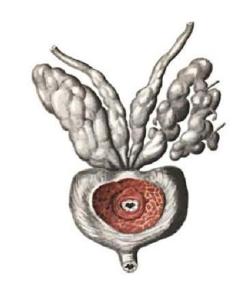 белый налет от простатита